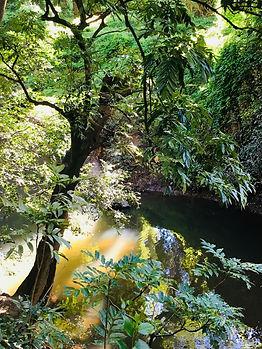 Stroll along the creek