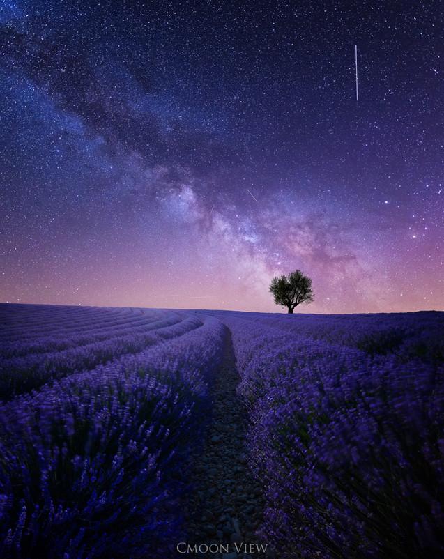windy dreamscape.jpg