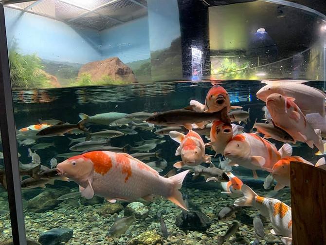 千歲市的水族館