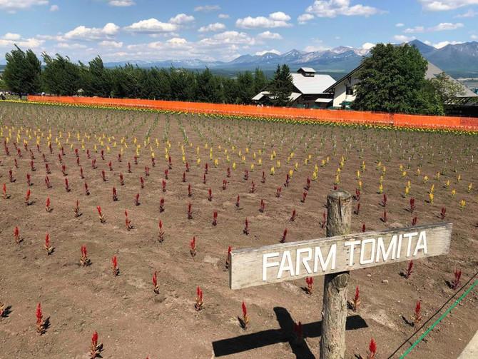 6月5日的富田農場