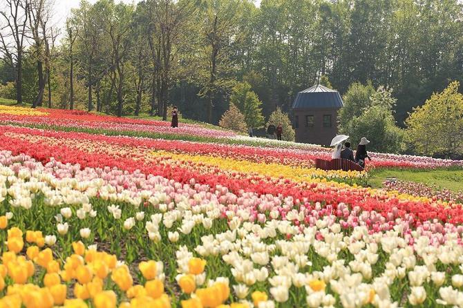 北海道花季