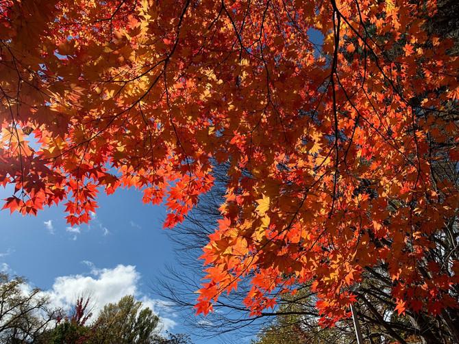 北海道大學金葉祭取消