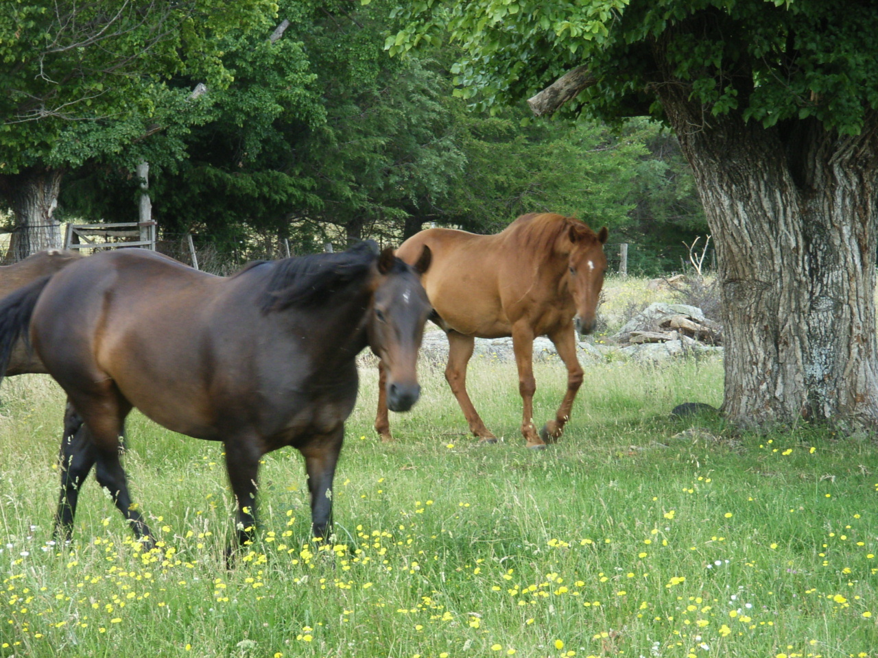 Farm Activities - Meet the horses