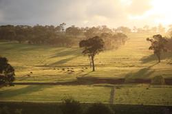 Sunrise across Black Sally's paddock