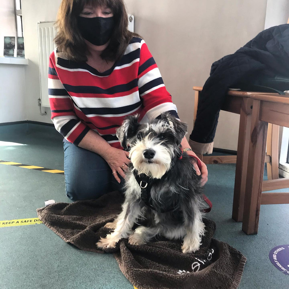 Connie the dog recovery after a dog attack
