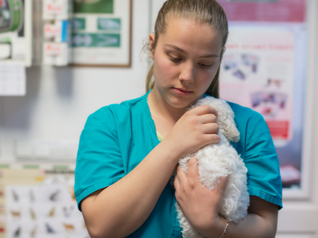 It's Veterinary Nursing Awareness Month!