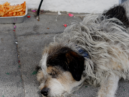The Artificial Sweetener that's Poisonous for Dogs