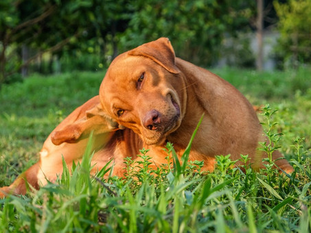 Is Your Pet Dying To Scratch That Itch?
