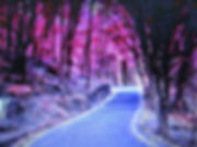 The Beautiful Road.jpg