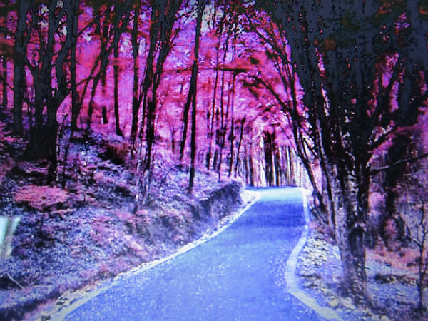 The Beautiful Road.jpg