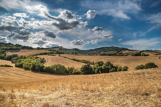 Landbrug.jpg
