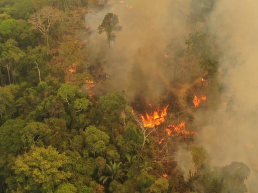 Kære politikere, Beskyt regnskoven!  Lav MERCOSUR-handelsaftalen om!