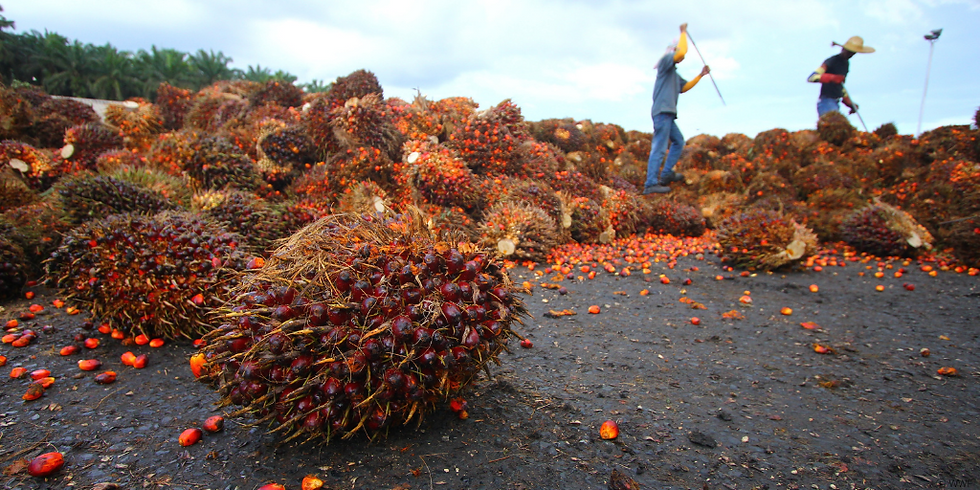 Palm oil industry.png