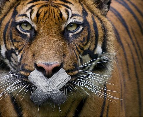 tiger%20tape_edited.jpg