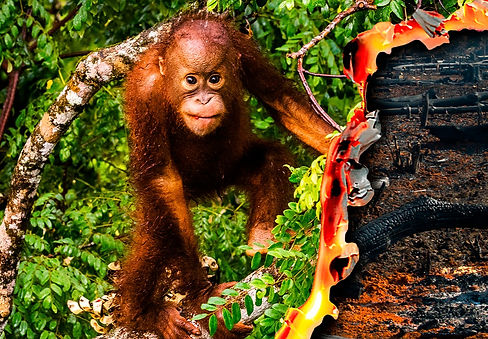 WWF_T4F_WEB_BANNER_ORANGUTAN_2200x834_ed