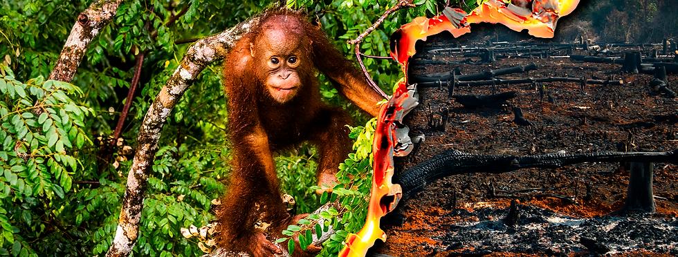 WWF_T4F_WEB_BANNER_ORANGUTAN_2200x834.pn