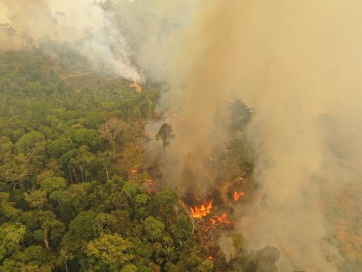 Pressemeddelelse: 1.000.000 mennesker kræver EU-lovgivning for at stoppe skovrydning og afbrænding
