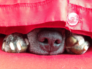 Who sleeps with their dog? Here's some amusing hints and tips 😁🐶🐾