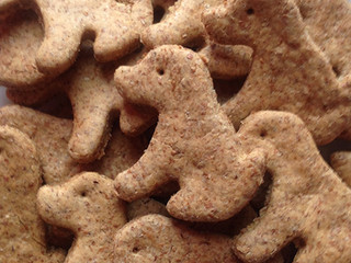 5 Reasons to Feed Your Dog Ginger