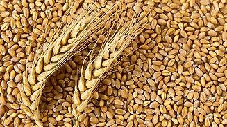 Hydrolyzed Wheat Protein