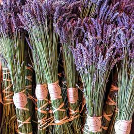 lavendar.jpeg