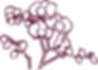 orchid-maroon.png