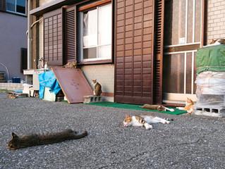 🐾島猫日記🐾~お昼寝~