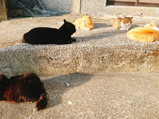 🐾島猫日記🐾