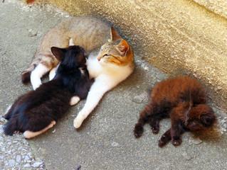 🐾島猫日記🐾~家族~