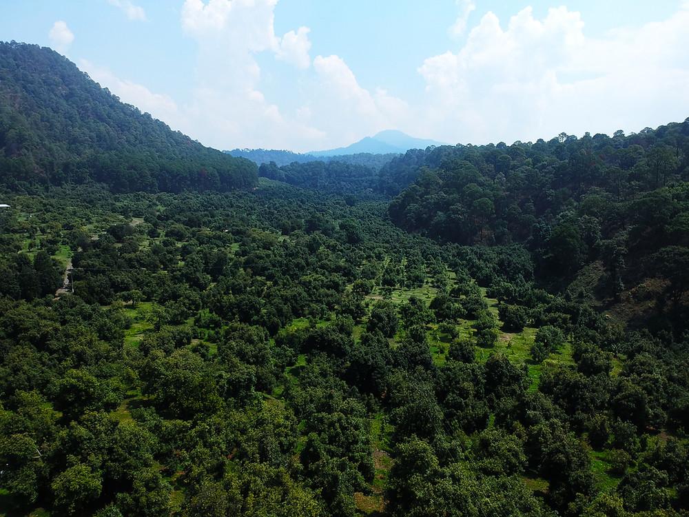 Rancho Agrícola El Zapotal, Michoacán.