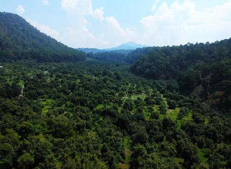 Integración vertical, el futuro de la Agroindustria Aguacatera de México
