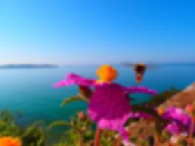 Zistrose, cistus incanus liebt Standorte in der Nähe des Meeres
