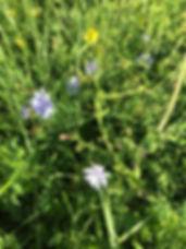 Wildblumen auf unserer Farm