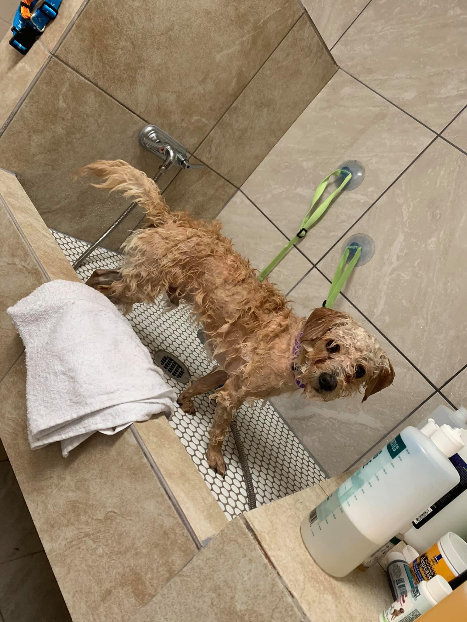 Bath & Brush