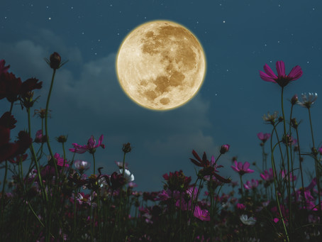 7/5(日)満月のKirtan開催
