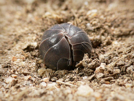 Fear, Pill Bugs, and the Possibility of Trust