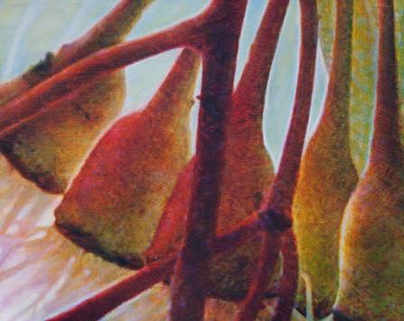 Gumnut Series