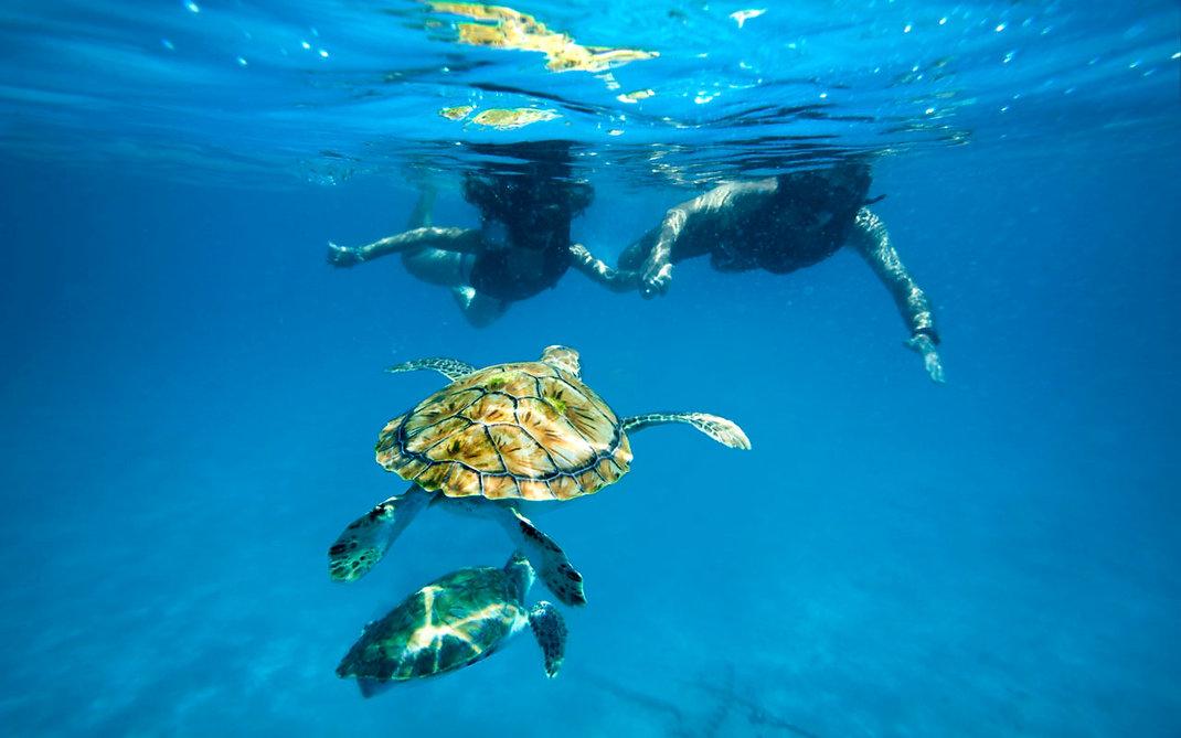 Turtle-012-1280x800.jpg