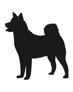 big_dog.jpg