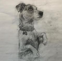 Frankie Sketch