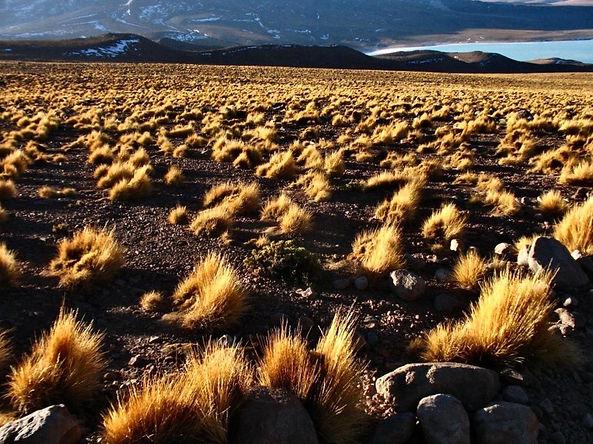 Investigadores peruanos fabrican paneles a base de ichu y cemento para combatir heladas