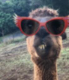asa-alpacca-glasses.jpg