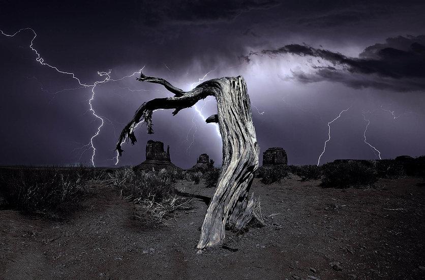 Dead Tree Lightning