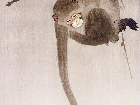 Reflectie -  het aapje en de maan