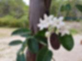 bloem foto by Kim de Jong.jpg