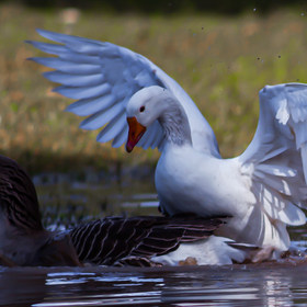 Animals&Birds-10.jpg