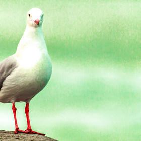 Animals&Birds-20.jpg