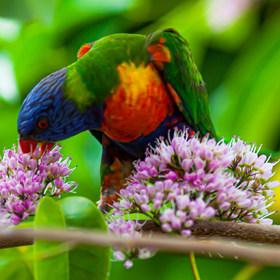 Animals&Birds-3.jpg