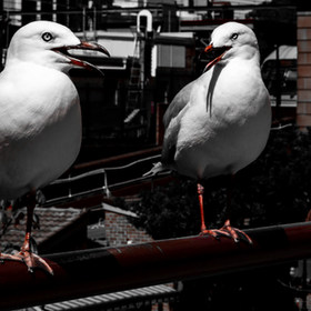 Animals&Birds-24.jpg