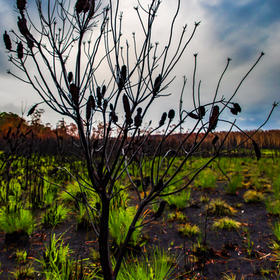 Landsacpe-12.jpg